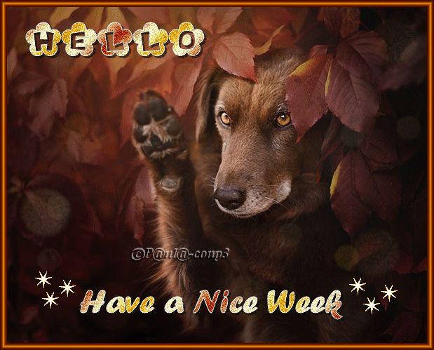 Hello. Have a Nice Week