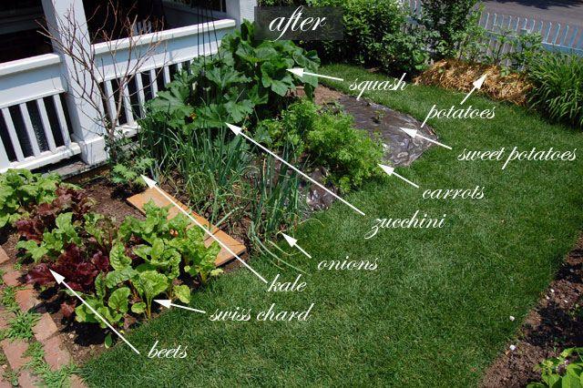 front yard vegetable garden one month update gardens sacks and