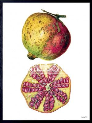 POSTER POMEGRANATE POSTER FROM VANILLAFLY #PSC101