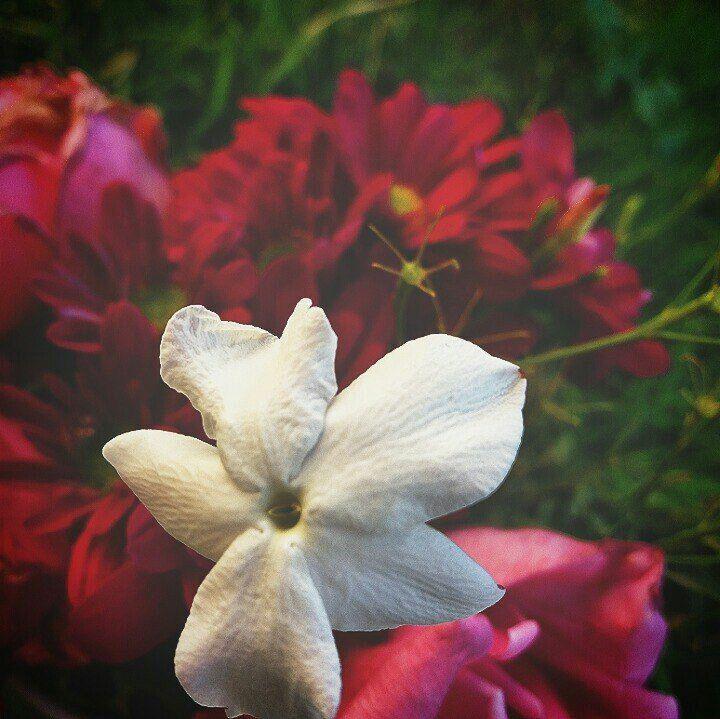 Pin By زهرة الياسمين On Fleurs ورد Flower Plants