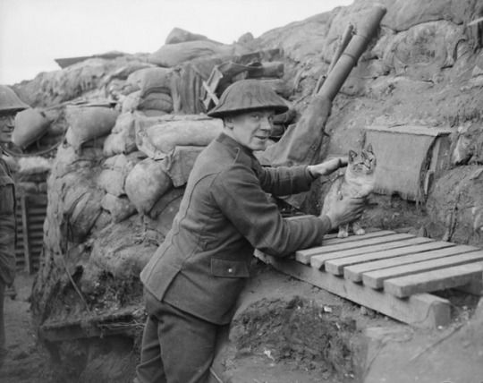 A British gunner with his pet cat. Cats were popular pets in the trenches, especially because they waged their own parallel war against the the endemic rat infestation. It was also believed that they could tell when a gas attack was coming and would run away beforehand, giving their owners time to put on gasmasks.