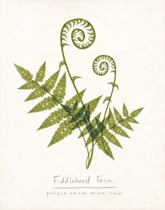 Fiddlehead Fern Modern Weeds Wildflowers by ShopAmySullivan