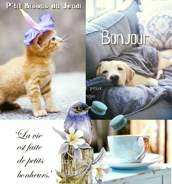 Epingle Par Boyer Sur Facebook Bon Jeudi Bonjour Animaux