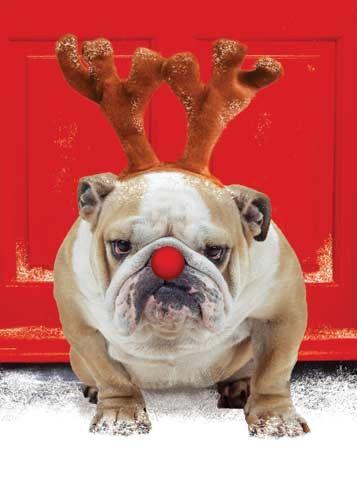 21 Days Until Christmas! #tistheseason #dogs