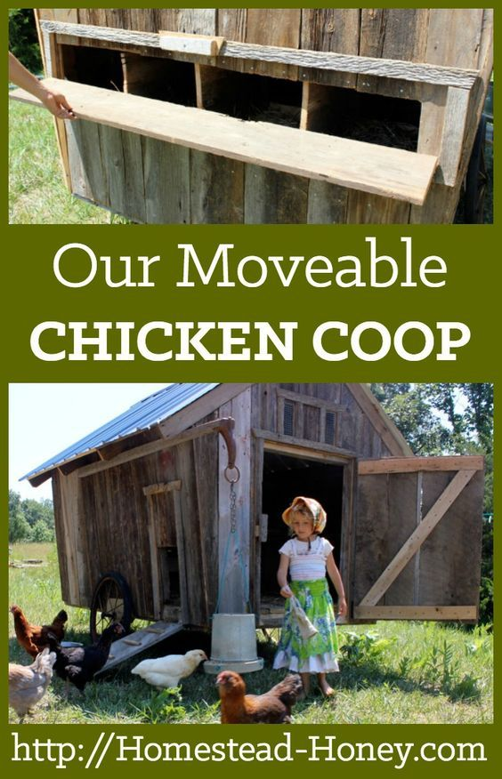 A unique and moveable chicken coop that we designed for our homestead flock of chickens and ducks | Homestead Honey