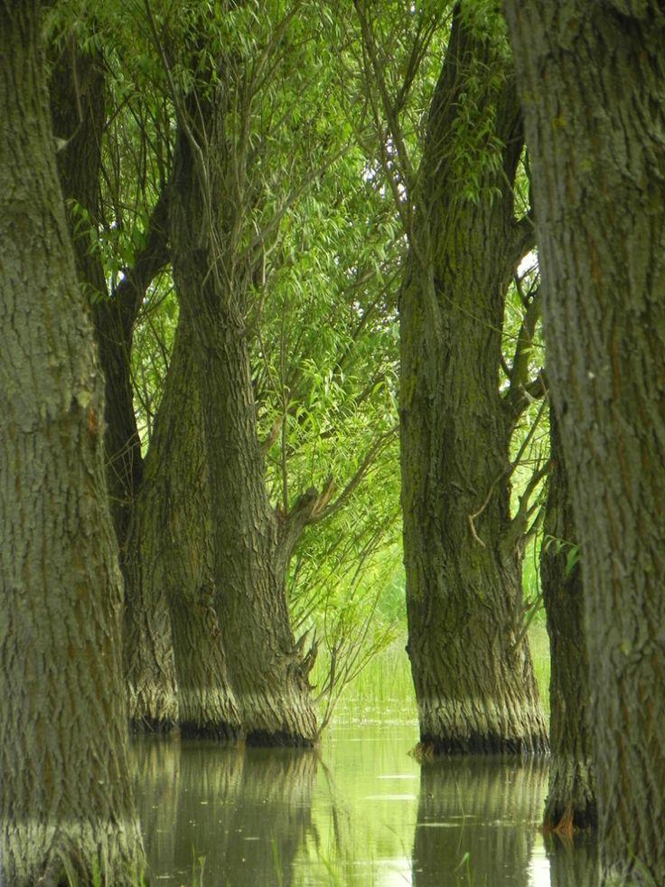 Danube Delta Romania Black Sea eastern Europe Letea forest
