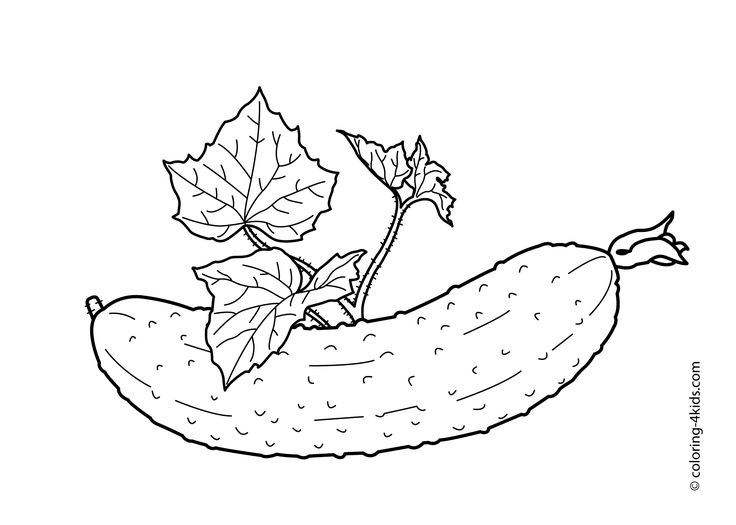 Cucumber With Leaves Vegetables Coloring Pages For Kids