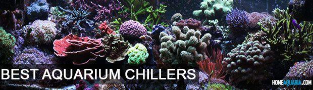 5 Best Aquarium Chillers