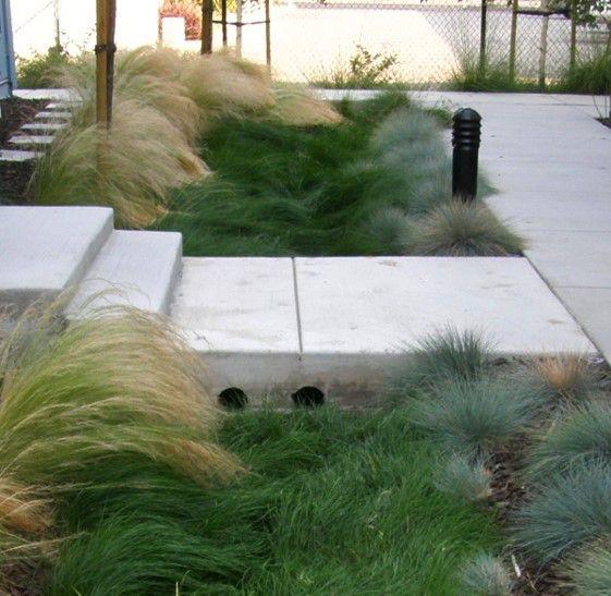 long grasses pale steps