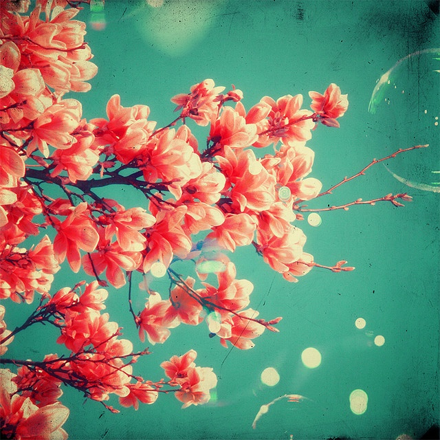 coral flowers.