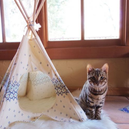 1000 ideas about cat teepee on pinterest dog tent american eskimo puppy and cats. Black Bedroom Furniture Sets. Home Design Ideas