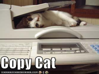 Copy cat: Laughing, Copy Cat, Cat Quotes, Copycat, Funny Cat, Pet, Funny Stuff, Funny Animal, Cat Lady