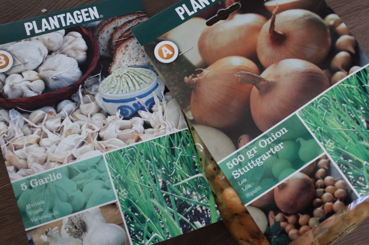 The first planting this year – Home &Hobby