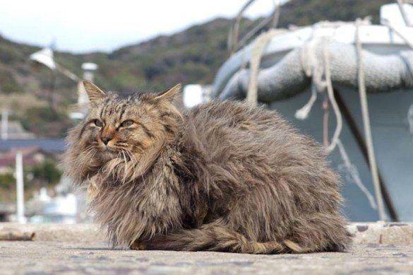 06. Ilha dos gatos