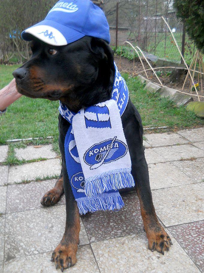 Dogs with attitude HC Kometa Brno
