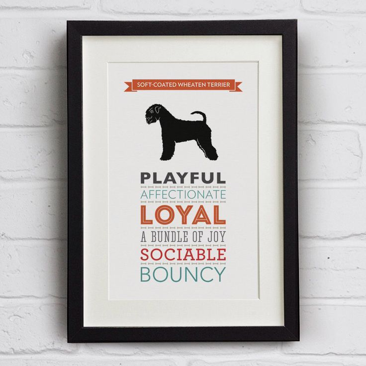 Soft-Coated Wheaten Terrier Dog Breed Traits Print by WellBredDesign on Etsy https://www.etsy.com/listing/210738083/soft-coated-wheaten-terrier-dog-breed