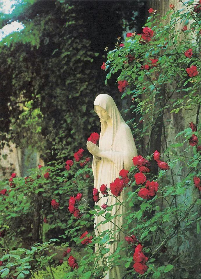 Perfect Find This Pin And More On Holy Mother Mary Garden By Leamilledge.