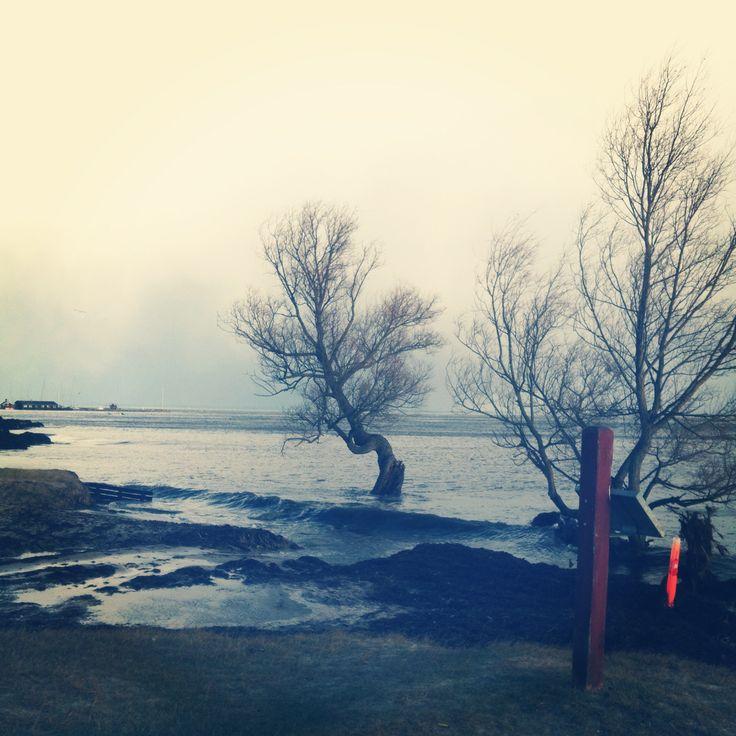 Stormen Bodil! Fodbad for piletræer vinteren 2013. Sletten, Peder Mads Strand, Humlebæk.