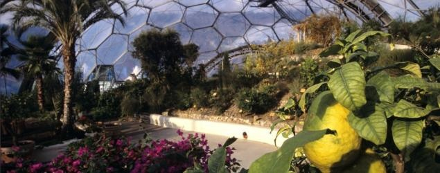 Top eco visitor attraction - rainforest, gardens & educational charity - Eden Project Cornwall UK