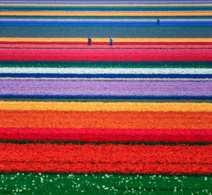 You Will Totally Want To Visit Holland After Seeing This! | http://www.ealuxe.com/want-to-visit-holland/