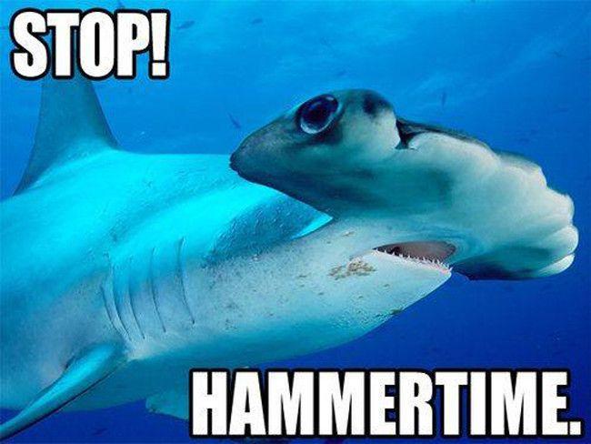 4 - The 25 Funniest Shark Memes | Complex
