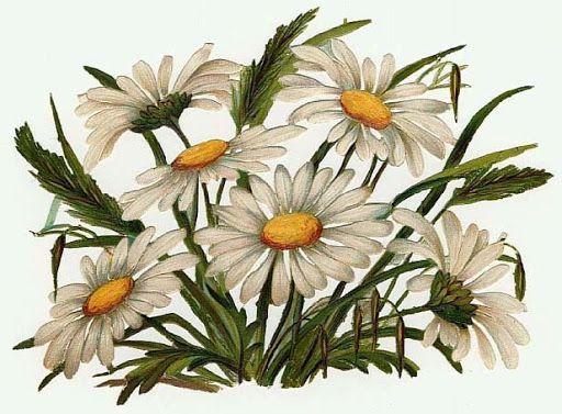 Daisy Flower Line Drawing : Best РОМАШКИ images painted flowers art