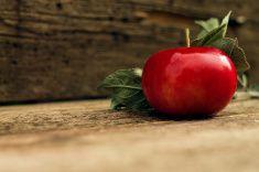 red apple крупным планом на деревянном фоне размытым stock photo