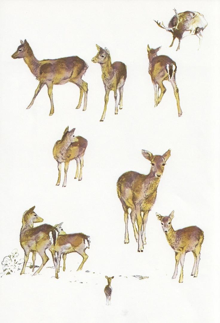 Vintage Deer Watercolour Illustration Animal Studies