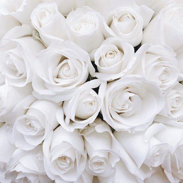 Flowers Special Girlfriend Beauty Boyfriend Garden Roses Https Weheartit Com Entry 326501492 White Roses Background White Aesthetic Flower Aesthetic Garden wallpaper beautiful white roses