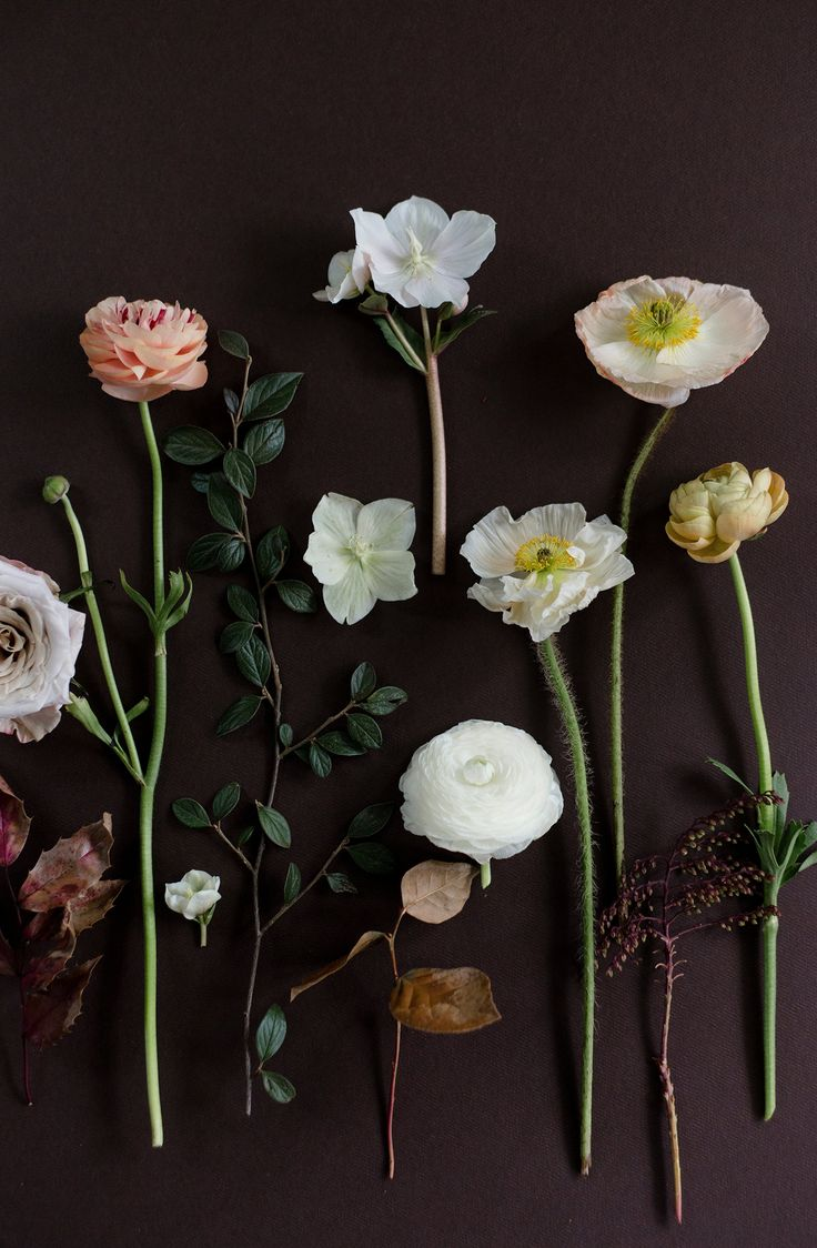 Best flora images on pinterest