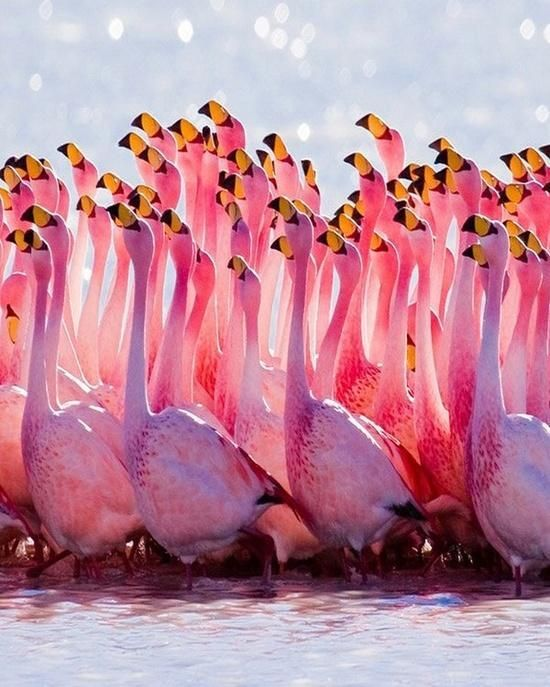Stunning pic of a flamboyance of Flamingos! Yes a group of Flamingos can be called a flamboyance! :)