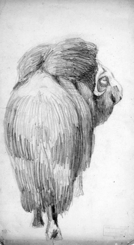 КП ОФ-8960 | Фонды Государственного Дарвиновского Музея