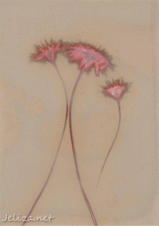 Lumen Print Bloom