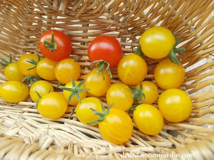 Red and Yellow gooseberry tomatoes
