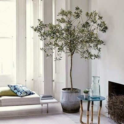 Interior Design: Fiddle Leaf Figs and Beyond