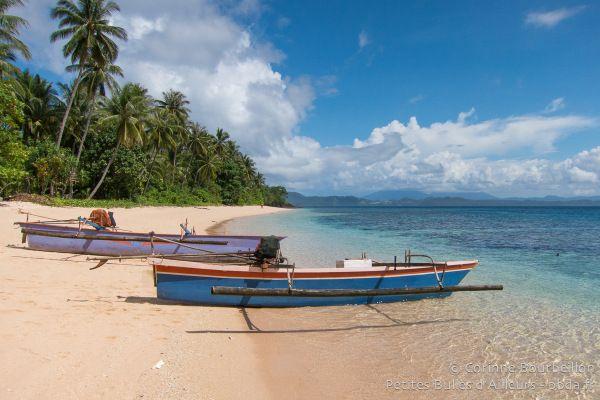 Coral Eye. Bangka Island, Sulawesi, Indonésie. Mars 2013.