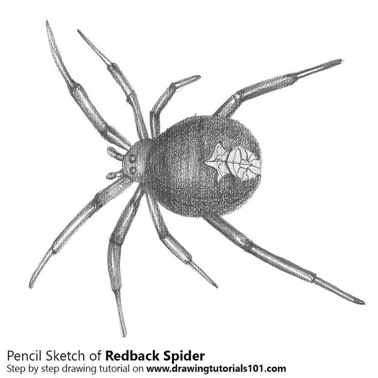 Redback spider with Pencils