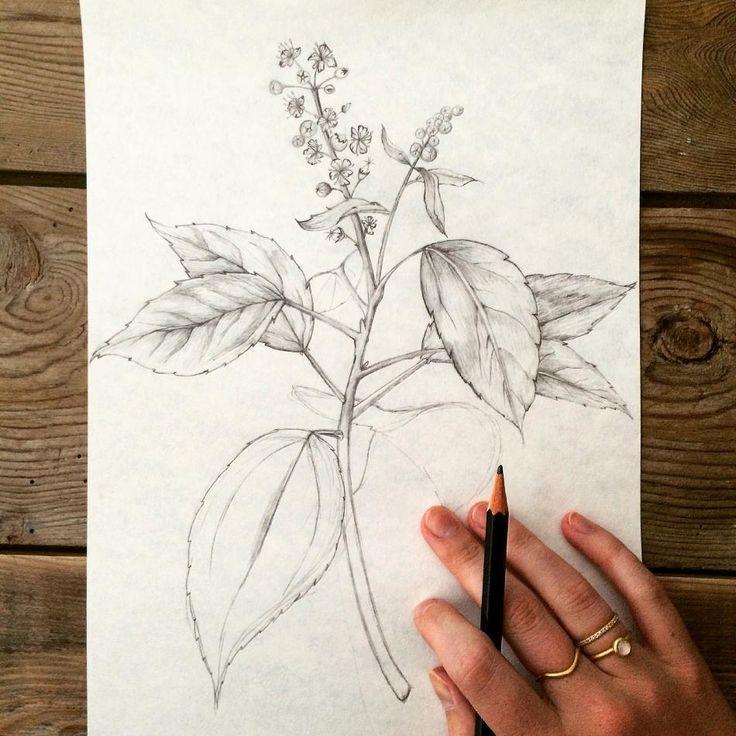 Illustration of a flower. Jewellery from hvisk
