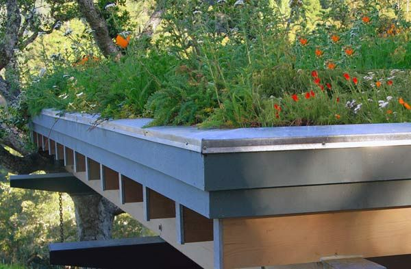 Green roof guide