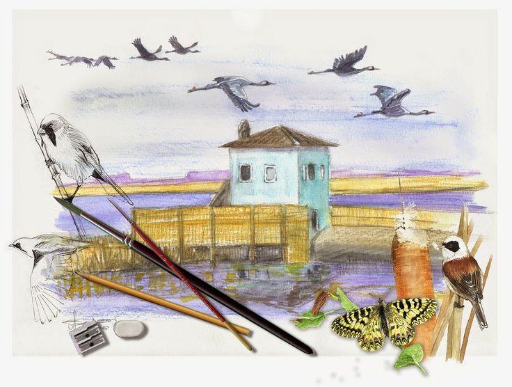 Alessandro Sacchetti - Wildlife Painter: NEWS!  Domenica 15 Giugno, atelier di disegno natu...
