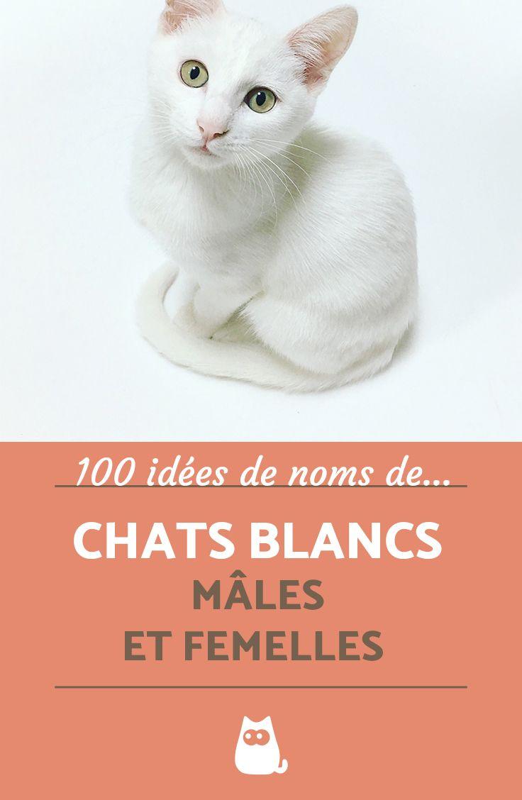 Vous Avez Un Chat Blanc A La Maison Ou Allez En Adopter Un Bientot Voici Notre Top 100 Des Noms Pour Chats Blancs Male Noms De Chat Chat Femelle Chats Blancs
