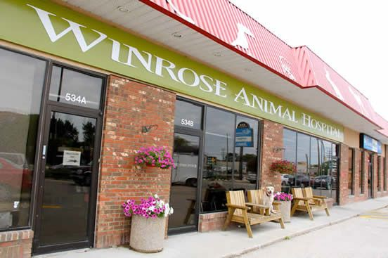 We are a full service veterinary hospital in South Winnipeg specializing in the complete and compassionate care and treatment of Winnipegs dogs, cats, rabbits, and pocket pets (mice, rats, hamsters, guinea pigs and the like.). We are also one of few Winnipeg clinics specializing in more exotic pets such as reptiles and birds.