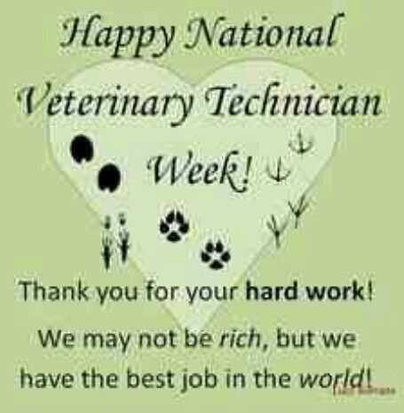 61 best A day in the life of a Vet Tech! images on Pinterest - vet tech job description