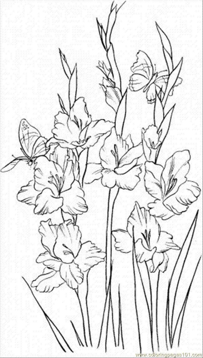 Gladiolus 2 coloring page Free Printable Coloring Pages