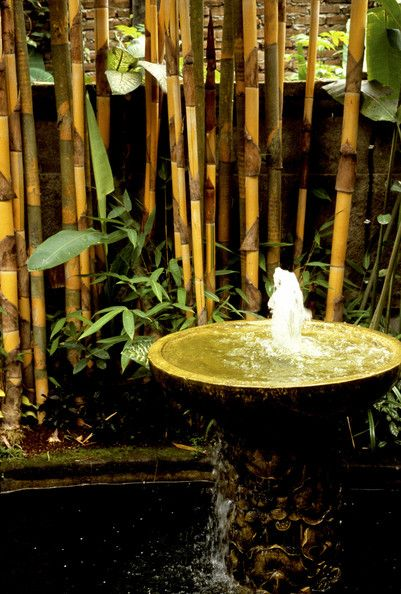 Brown Asian Garden      Keywords:   Bambusa Vulgaris,   Oriental Style,   Oriental Garden,   Garden,   Japanese Style,   Fountain,   Bamboo,   Japanese Garden,   Water Feature,   Refreshing