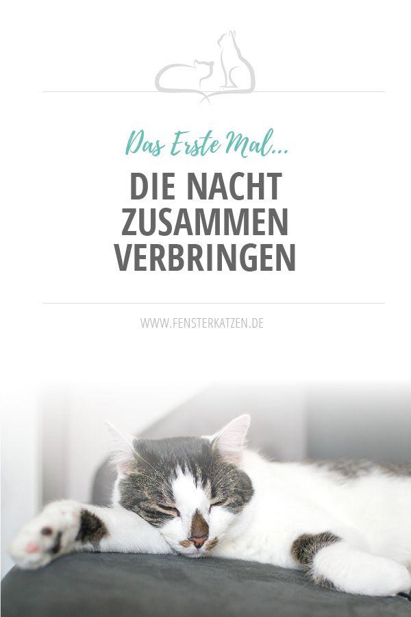 Die Nacht zusammen verbringen | Katzen | Cats