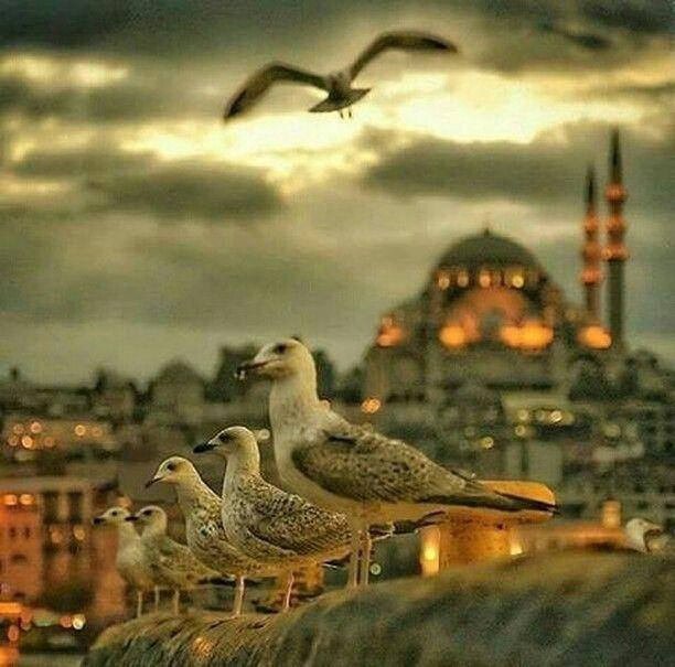 Credit to @seeyouturkey : Waiting for fish Istanbul (Photographer: @katerina_kesgin) #turkey #seeyouturkey #istanbul #estambul #стамбул #اسطنبول #イスタンブール#איסטנבול #κωνσταντινούπολη #estanbul #turquie #turchia #turquía #türkei #турция #Туреччина #تركيا #トルコ#travel #استانبول