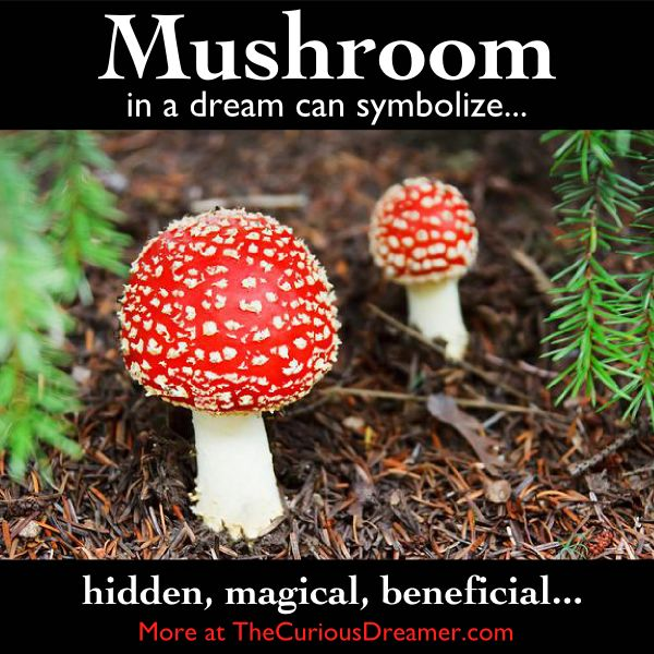 A mushroom as a dream symbol can mean..  More at TheCuriousDreamer.   #DreamMeaning #DreamSymbol