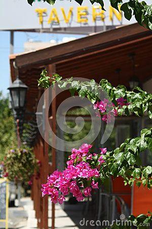 Branch purple bougainvillea, on the background of tavern. Larnaca, Cyprus