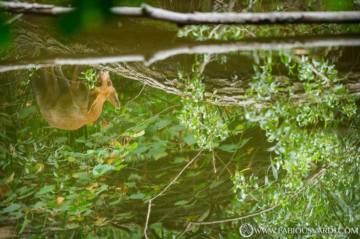 Reflection www.italianwildlife.it #italianwildlife #italian wildlife